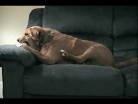 Dogs do the Darndest Things… For a Reason