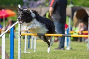 dog_jumping