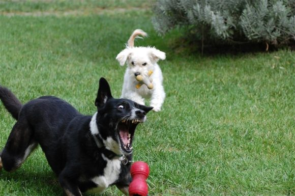 Think Outside The Kong: Food Puzzle Alternatives For Dogs