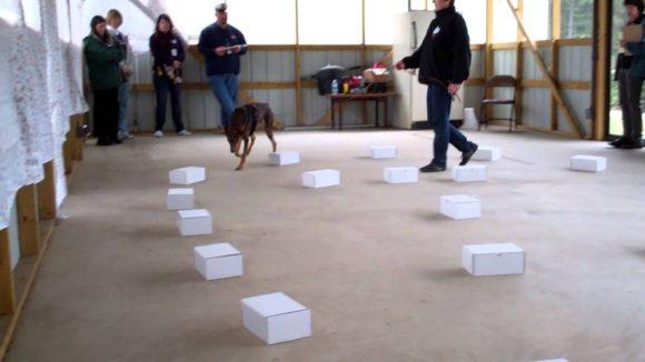 Top 5 Dog Training Myths